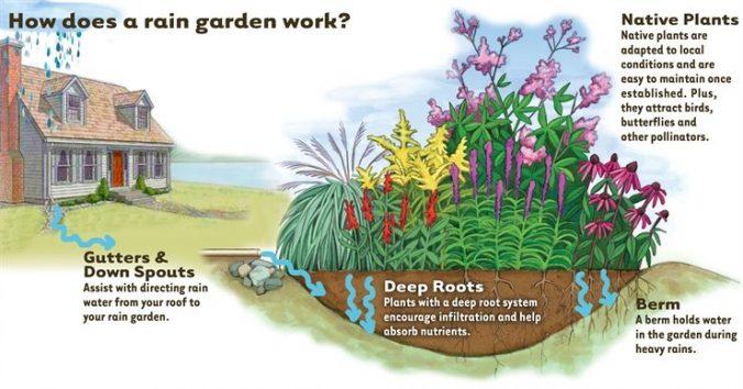 Parker Eco Pest Control Rain Gardens