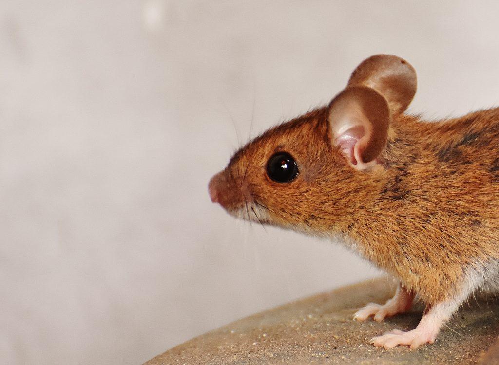 MiceCreateFires