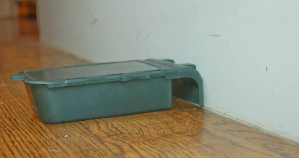 Live natural mouse trap