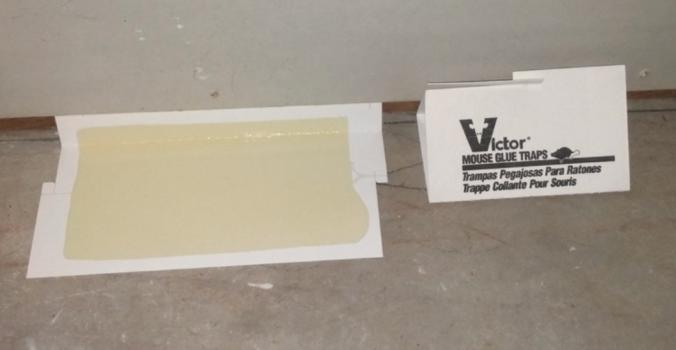 Natural glue mouse trap