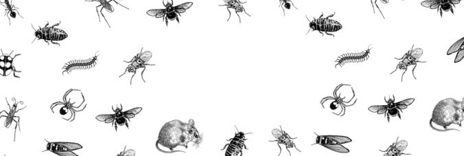 Vintage bug illustration pattern