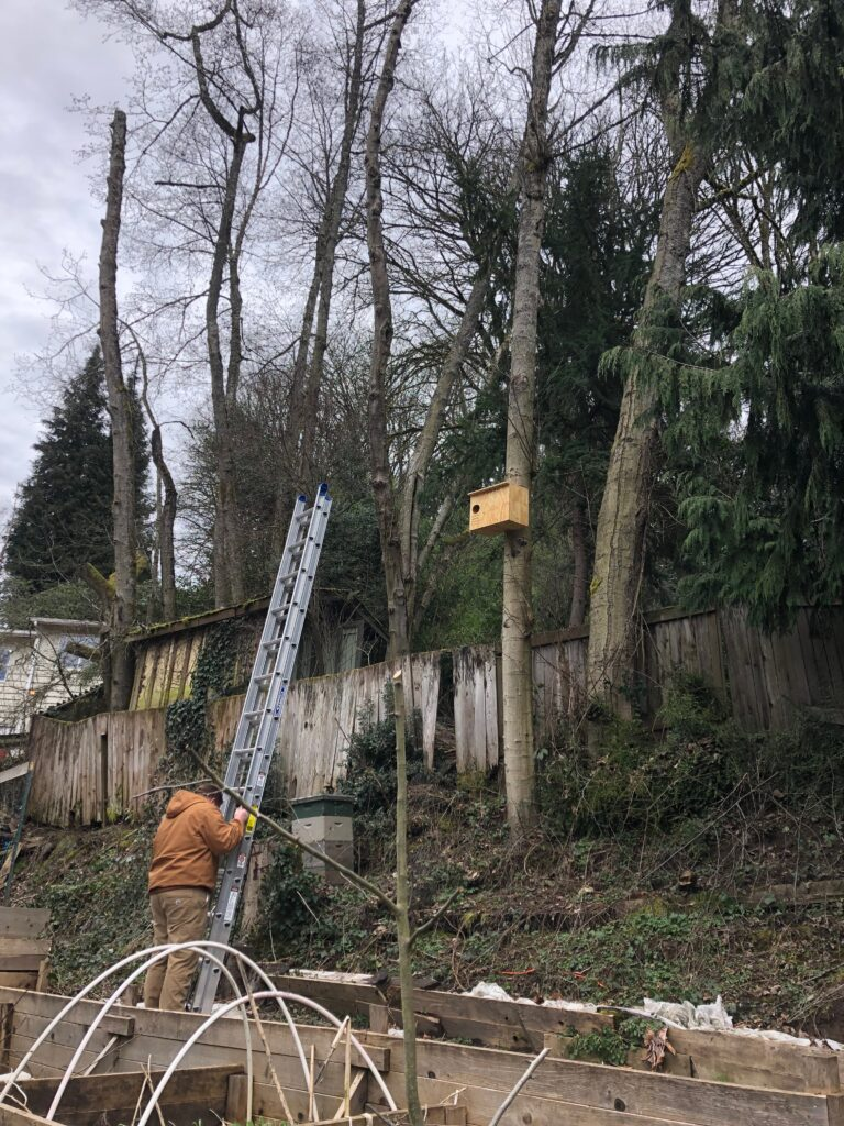 Installing a barn owl box for rodent control in Seattle home