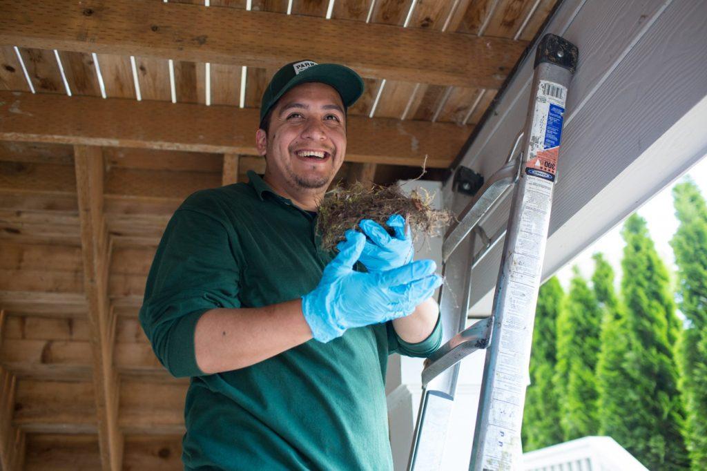 pest control technician in Shoreline, Washington taking out bird nest