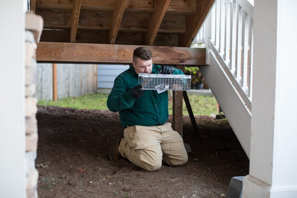 Natural rodent control method, live physical traps